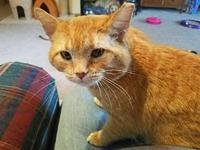 My story FIV+ Connor is a 2 year old male tabby who was