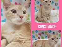Constance's story Our adoption fee covers felv/fiv