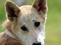 Contessa is a beautiful girl! A mix of Husky and