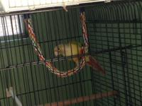 I have a proven female cinnamon green cheek conure