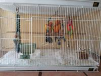 Wanting to reduce my parrot stock, available I have the