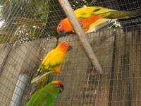 I have 5 aratinga conures left and I want them gone