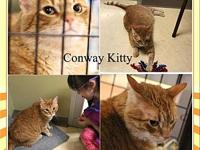 Conway Kitty's story Hello my name is Conway Kitty and