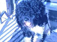Bella is a family friendly puppy who was purchased at a