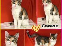 Cookie's story Cookie is very playful and outgoing! She
