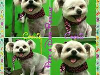 Cookie's story My name is Cookie Im a 6 year old,