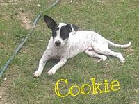 Cookie's story Please understand we must conduct home
