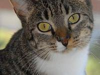 Cookie (tabby)'s story You can fill out an adoption