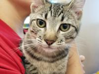 Cookie is a sweet friendly playful kitten cookie has