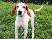 Coonhound - Burl - Medium - Adult - Male - Dog