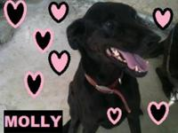 Coonhound - Molly - Large - Adult - Female - Dog To