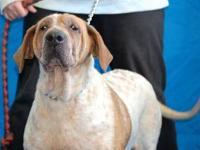 Coonhound - Penelope - Large - Senior - Female - Dog
