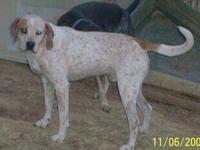 Coonhound - Regal - Large - Senior - Male - Dog