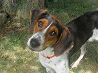 Coonhound - Sarah Mclachlan - Medium - Young - Female -