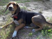 Coonhound - Sweet Agnes - Medium - Adult - Female -