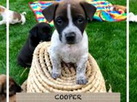 Meet Cooper, Mom was a Cairn Terrier/Schnauzer mix and