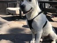 Cooper is an amazing male mixed dog of 2 yrs old and 50