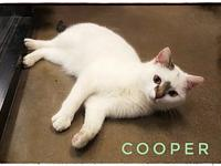 Cooper's story If you are looking for a sweet and