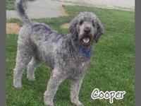 Cooper's story All dogs are spayed/neutered, have age