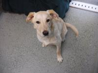 Cooper is a 1 year old neutered male.  He came in as a