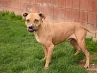 .Meet Cooper! Cooper is a male, 3 year old, Pit Bull