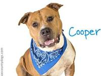 *COOPER's story Visit Coopers webpage