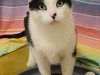 * NOTE: All Aurora-Naperville cats/kittens' adoption