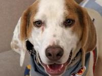Cooter's story Cooter is a hound lovers dream! He is