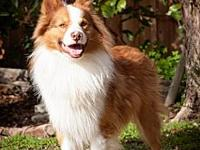 COPPER's story  COPPER Male 8 Years & AVAILABLE - for