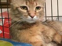 Copper's story HISTORY:   This sweet cat was