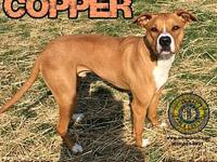 Copper's story You can fill out an adoption application