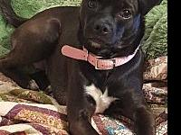 Cora's story ADOPTION REQUIREMENTS: Fence No