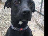 Cora's story Cora is a sweet 3 year old girl from