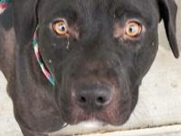 Cora- 1 yr old black pit mix. Cora was abandoned at the