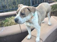 Cora was rescued from San Jacinto Shelter. She is so