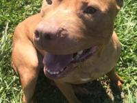 Cora is a 2 year old Pit Bull who is extremely smart