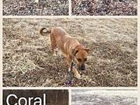 Coral's story All adoptions are $200 per dog which