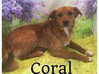 Coral's story Name: Coral Age: 1-2years Female Breed: