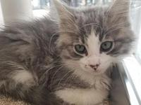 Corbin's story I'm a playful kitten looking for the
