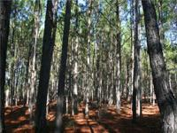 The Crisp Timberland - Ditch Rd Tract offering is