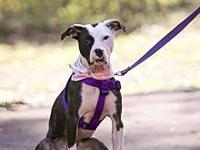 Coretta's story Coretta is a young pup. She is our