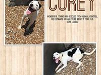 Corey's story Gorgeous young male. Corey is a very
