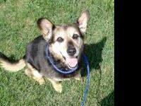 Corgi - Dolly - Medium - Senior - Female - Dog Click