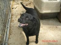 Corgi - Maggie May - Small - Adult - Female - Dog