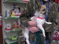 Corgi - Mary Jane - Small - Adult - Female - Dog Mary