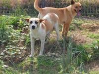 Corgi - Zeva - Small - Adult - Female - Dog Hey there,
