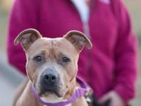 Corina is a shy, sweet mixed-breed female who came to