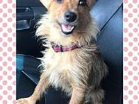 Corkie's story Corkie is a 2 year old yorkie mix. house