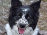 Corky is a 4 year old Border Collie cross. She loves