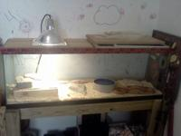 55 gallon tank with light, water bowl, hiding rock, and